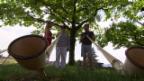 Video «Alphornstunde mit Eliana Burki» abspielen