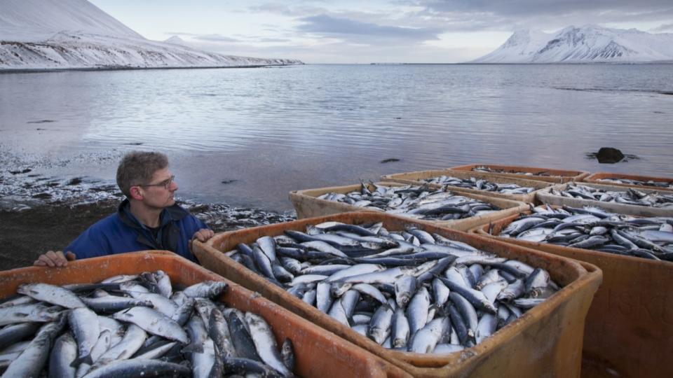 Island führt allgemein die Vier-Tage-Woche ein