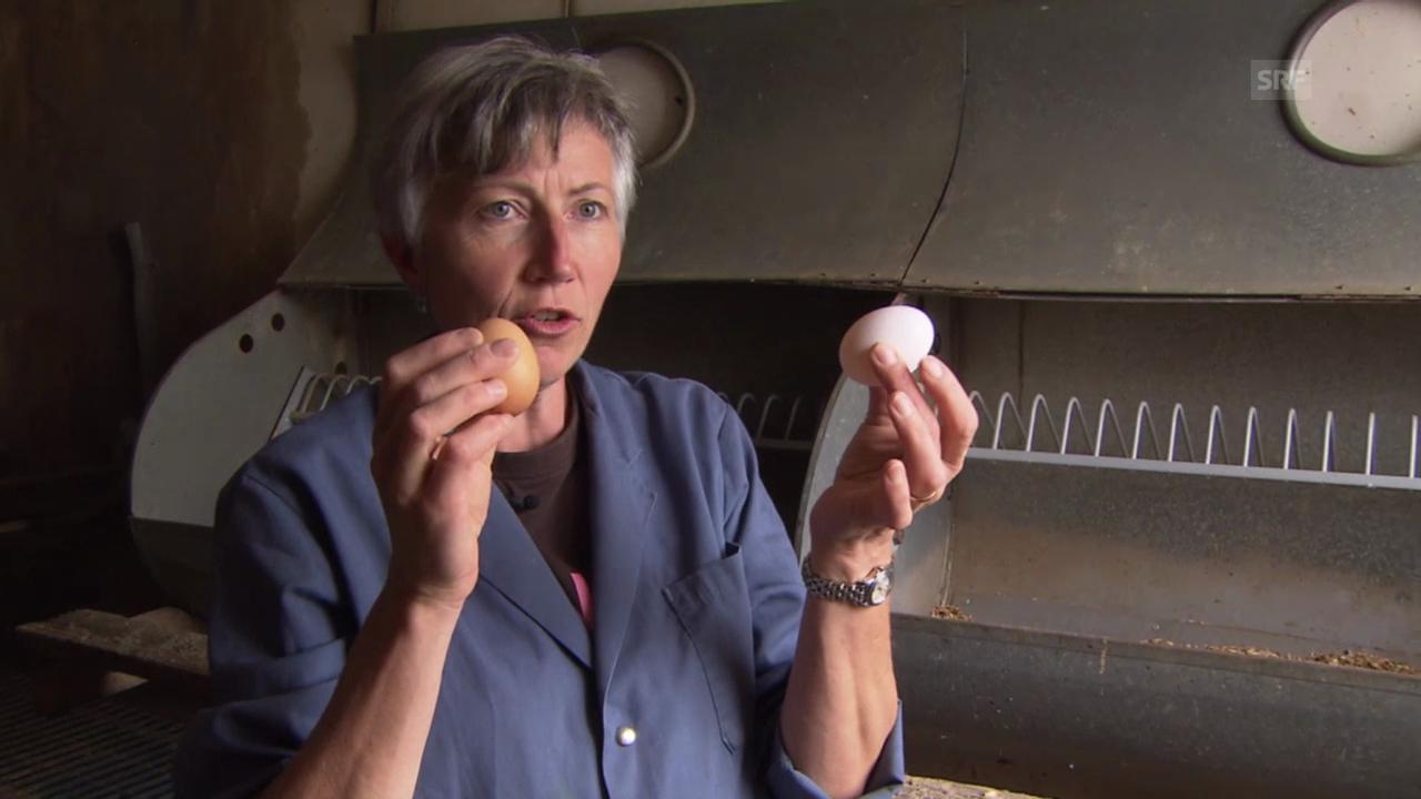 «SRF bi de Lüt – Landfrauenküche» 2014: Von Hühnern und Eiern