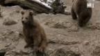 Video «Wohin mit überzähligen Zoo-Tieren?» abspielen