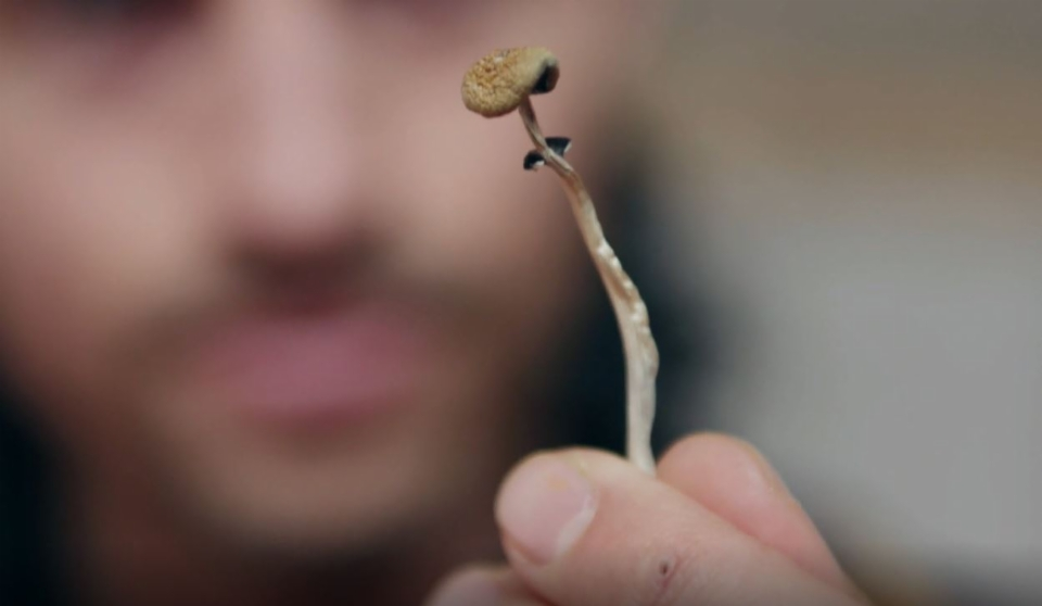 Drogen als Medikamente: Wie LSD und Co heilen könnten