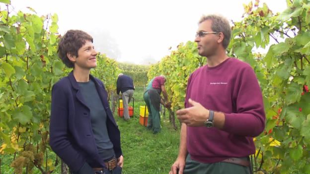 Video «Lukas Baumgartner will koscheren Wein produzieren.» abspielen