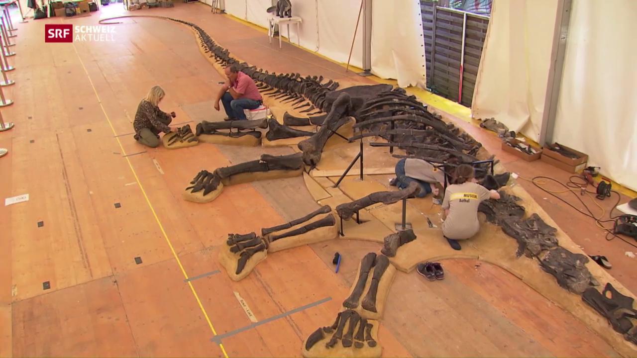 Gigantisches Dinosaurier-Skelett im Naturhistorischen Museum Genf