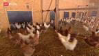 Video «Bio-Bauern wollen maximal 4000 Hühner pro Hof» abspielen