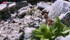 Video «Bodenforscher finden Mikroorganismen in Gletscher» abspielen
