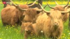 Video «Zurück zur Natur» abspielen