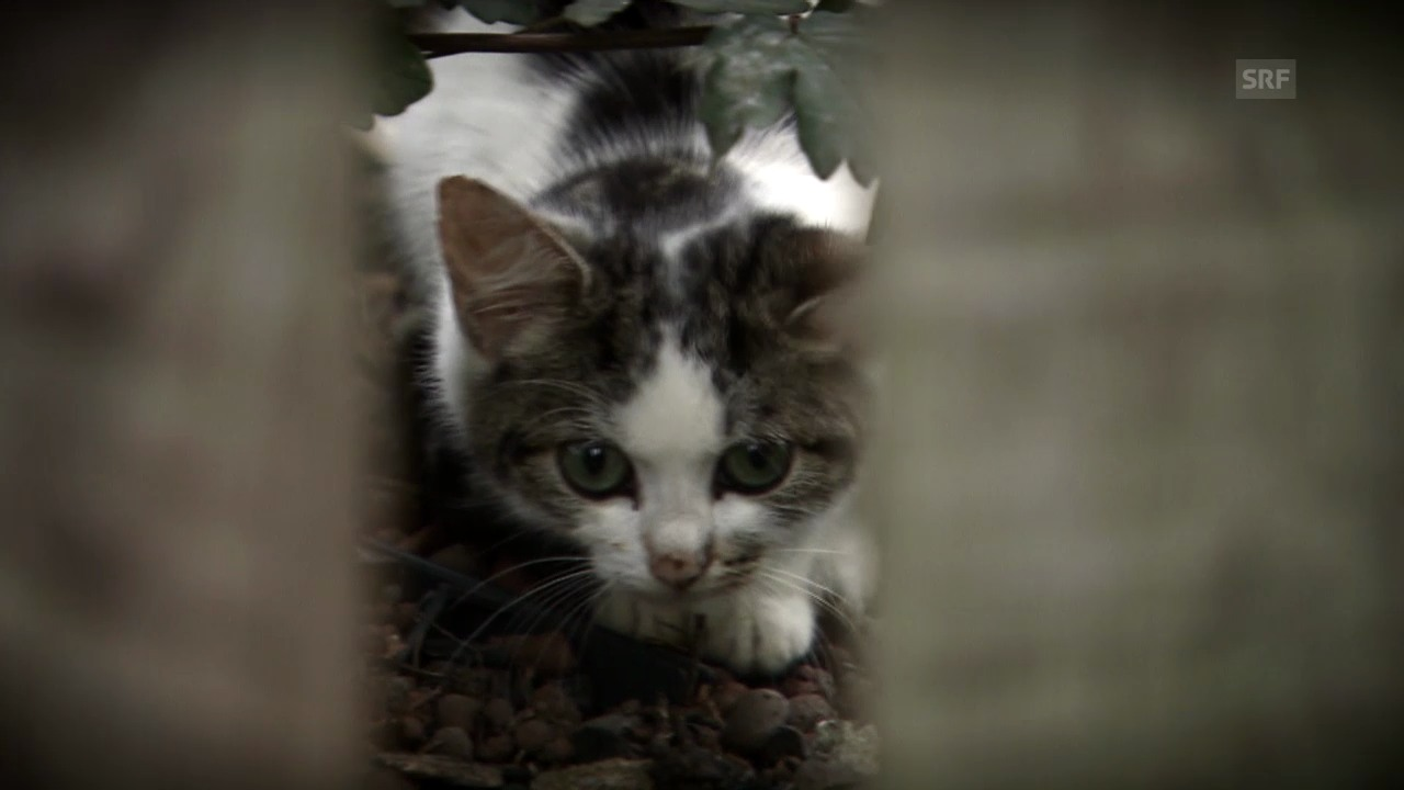 «Einstein» entdeckt... verwilderte Katzen