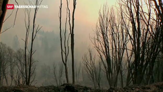Video «Feuerbrände in Kalifornien» abspielen