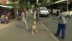 Video «Kampf gegen streunende Hunde» abspielen
