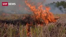 Link öffnet eine Lightbox. Video Bauern setzen Felder in Flammen abspielen