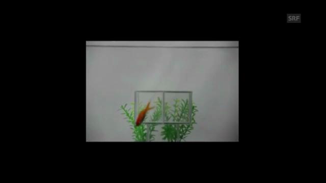 Goldfisch aus dem Nichts, Katze ohne Kopf (NTU/Arxiv)