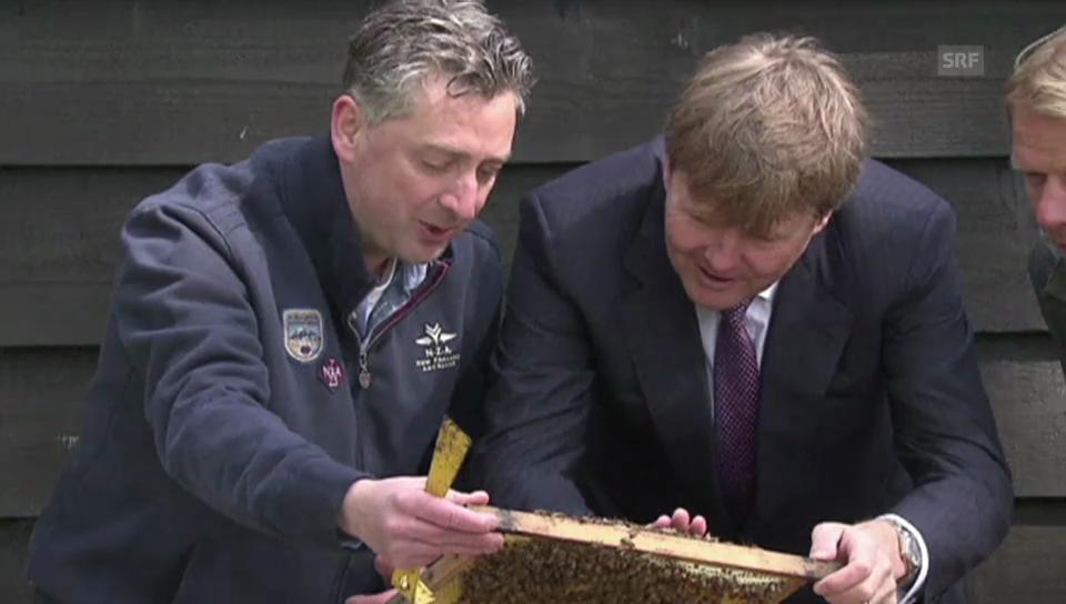 König trifft Königin: Willem Alexander und die Bienen (unkomm.)