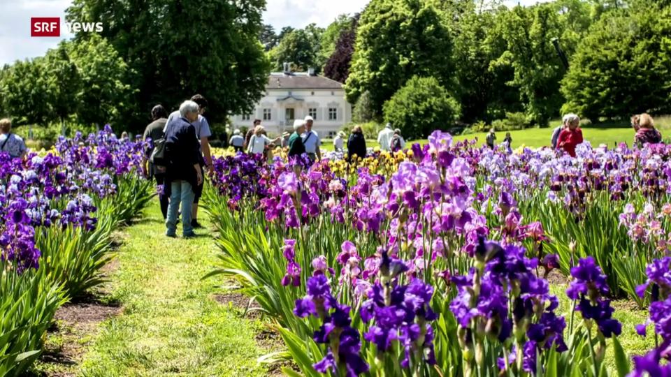 Grösste Iris-Sammlung der Welt ist in Basel