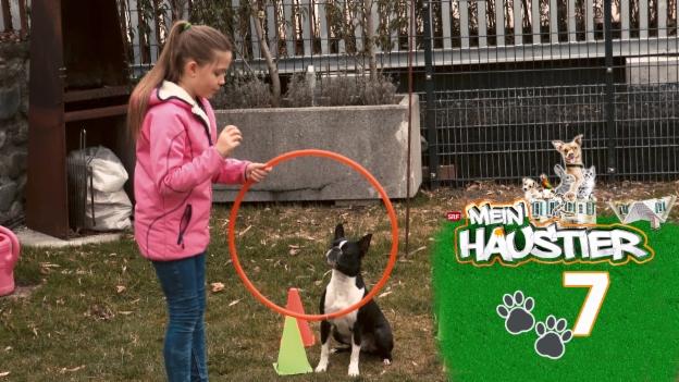 Video «Marisas Hund ist ein Energiebündel» abspielen