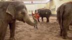 Video «Circus Knie – Wie ein Programm entsteht» abspielen
