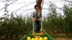 Video «Tomaten aus dem Luzerner Seetal» abspielen