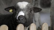 Link öffnet eine Lightbox. Video Tiergeschichten (6/10): Streit in der Tierfamilie abspielen