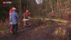 Video «Grosse Baumrodung wegen Pilzbefall» abspielen