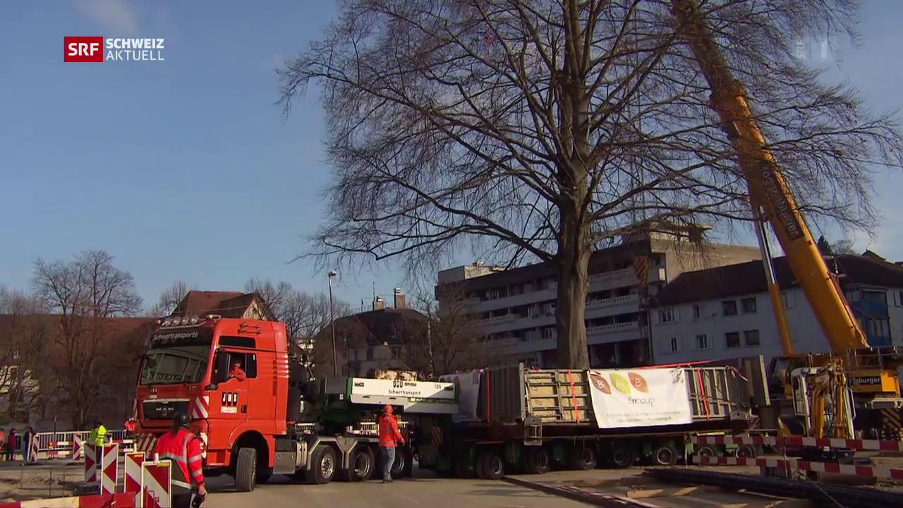 Ein 100-Tonnen-Baum geht auf Reisen