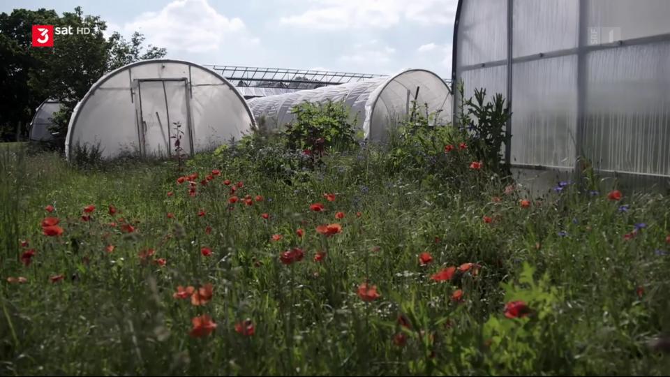 Ist eine Landwirtschaft ganz ohne Pestizide möglich?