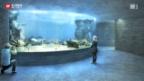 Video «Meerlandschaft in Basel» abspielen