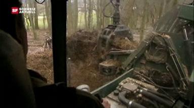 Video «Holzheizkraftwerk» abspielen