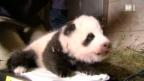 Video «Wie kommunizieren Tiere?» abspielen