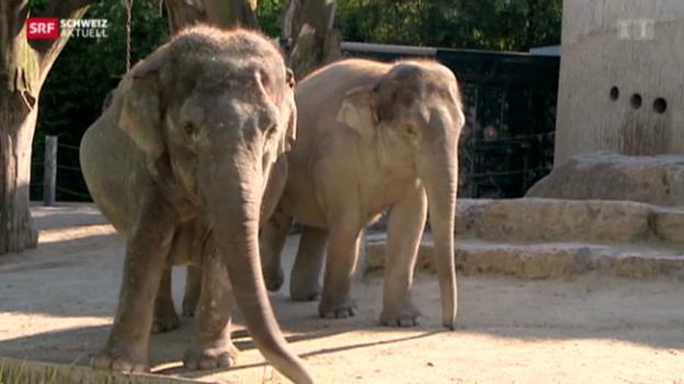 Video «Elefantöses Dach für Elefanten im Zoo Zürich» abspielen