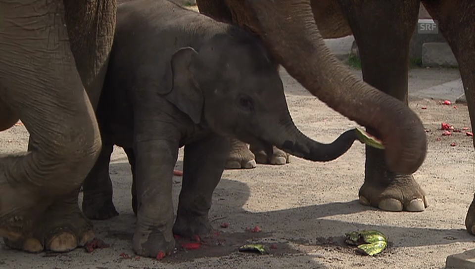 Elefantentaufe im Kinderzoo