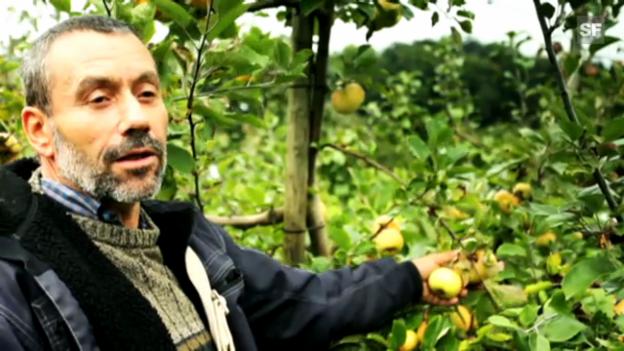 Video «Urs Heinzelmann: «Im Supermarkt gibts ‹Hansueli› nicht»» abspielen