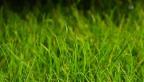 Video «Archivperle: Woher kommt der Rasen?» abspielen