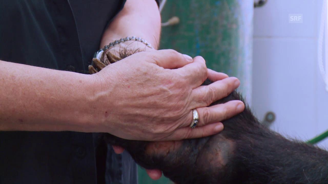Für die Befreiung von Bären in Vietnam