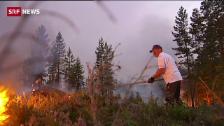 Link öffnet eine Lightbox. Video Waldbrände ausser Kontrolle abspielen