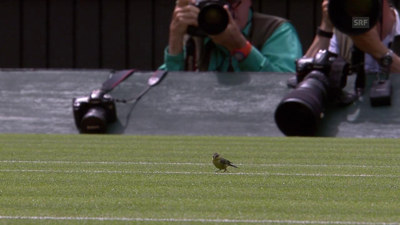 Tennis: Spatz auf dem Centre Court in Wimbledon
