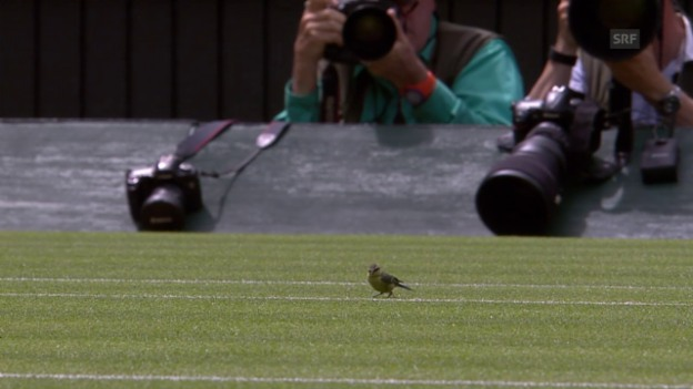 Video «Tennis: Spatz auf dem Centre Court in Wimbledon» abspielen