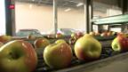 Video «Kurzarbeit wegen schlechter Ernte» abspielen
