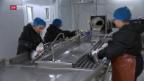 Video «Erste Lachse sind parat» abspielen