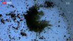 Video «Bachflohkrebse gegen Schadstoffe» abspielen