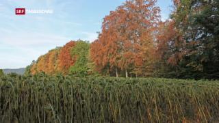 Video «Wald im Klimawandel» abspielen