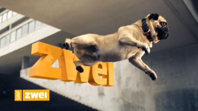 Station Ident SRF zwei: Hund