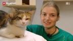 Video «Berufsbild: Tierpflegerin EFZ» abspielen