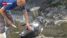 Link öffnet eine Lightbox. Video Seehunde üben den Tierarzt-Besuch abspielen