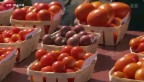 Video «Tomaten nach Mass» abspielen