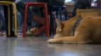 Video «Hunde beruhigen Kinder» abspielen