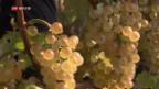 Video «Schweizer Wein «Big in Japan»» abspielen