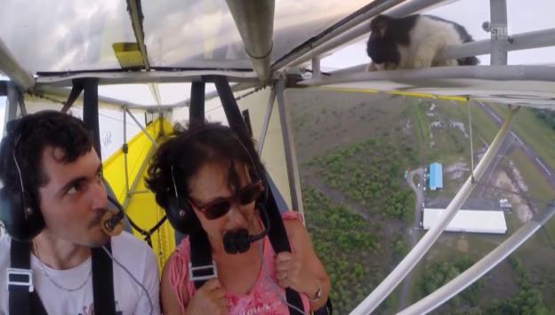 Video «Blinder Passagier an Bord» abspielen