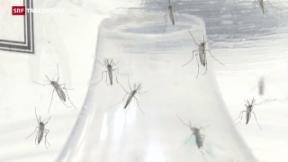 Video «Zika-Virus hat laut WHO ein alarmierendes Ausmass angenommen» abspielen