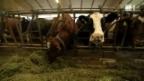 Video «Krise im Milchmarkt» abspielen