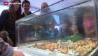 Video «Küken-Ausstellung in Luzern» abspielen