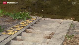 Video «Tiefe Wasserpegel in Schweizer Gewässern» abspielen